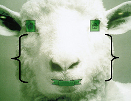 David_byrnes_sheep