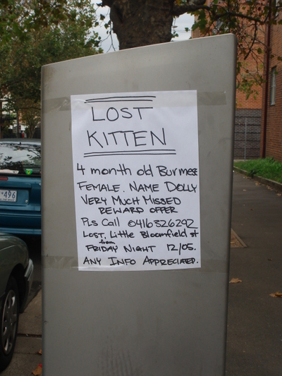 Missing_kitten